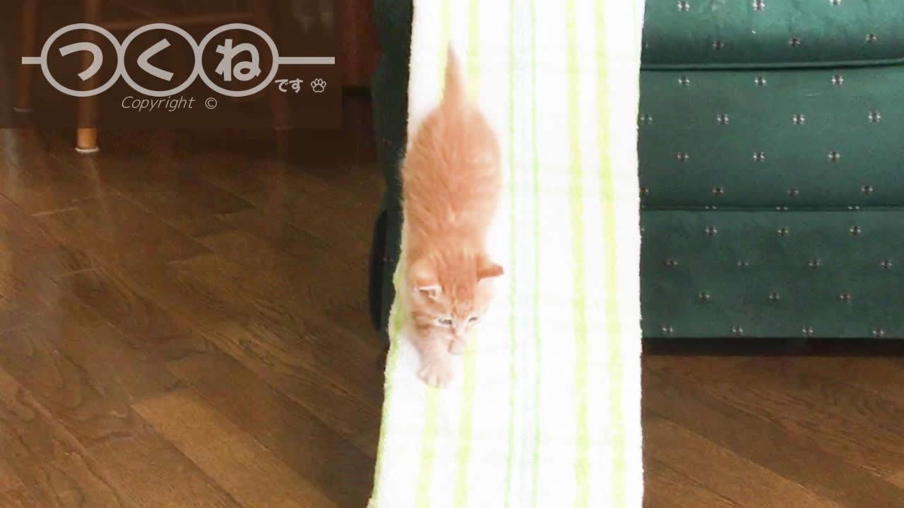 慎重にスロープを歩いている猫つくね