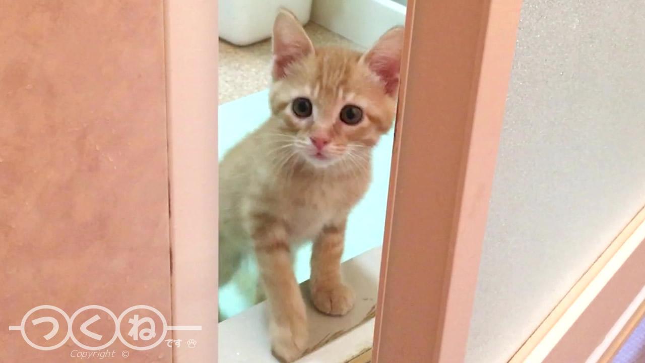 浴室内が気になる子猫