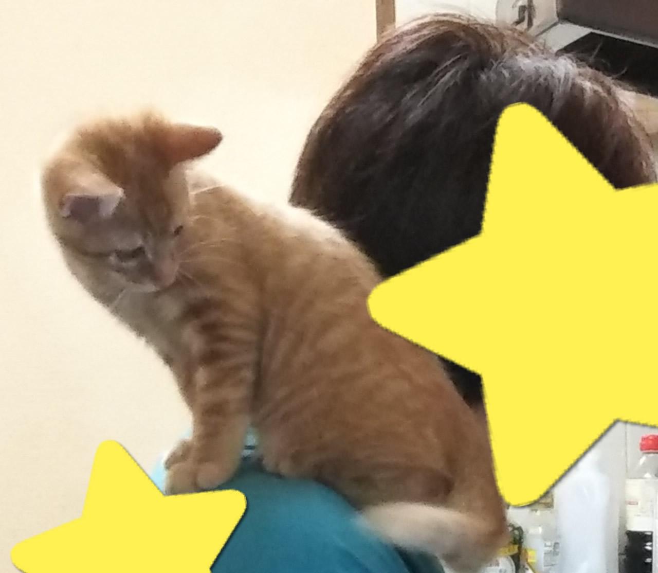 洗い物中、肩に乗る子猫つくね