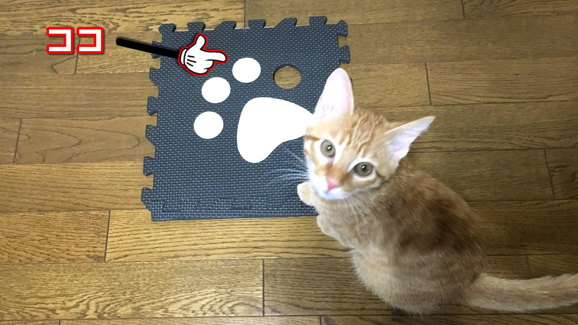 マットの一部を外す子猫