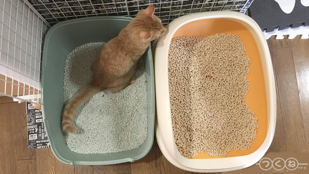 トイレと砂を変更して試す