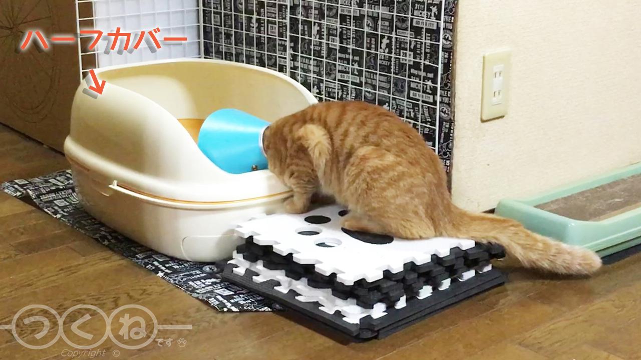 カラーが邪魔 トイレに入れない猫