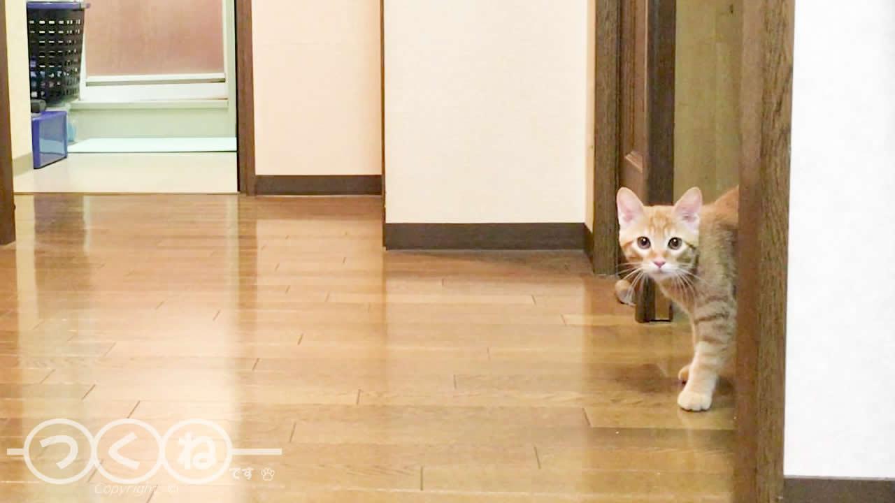 飼い主のお風呂が気になる猫