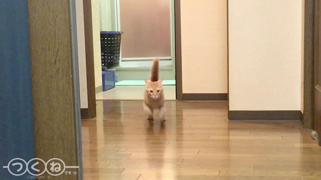 お風呂場を出入りする猫