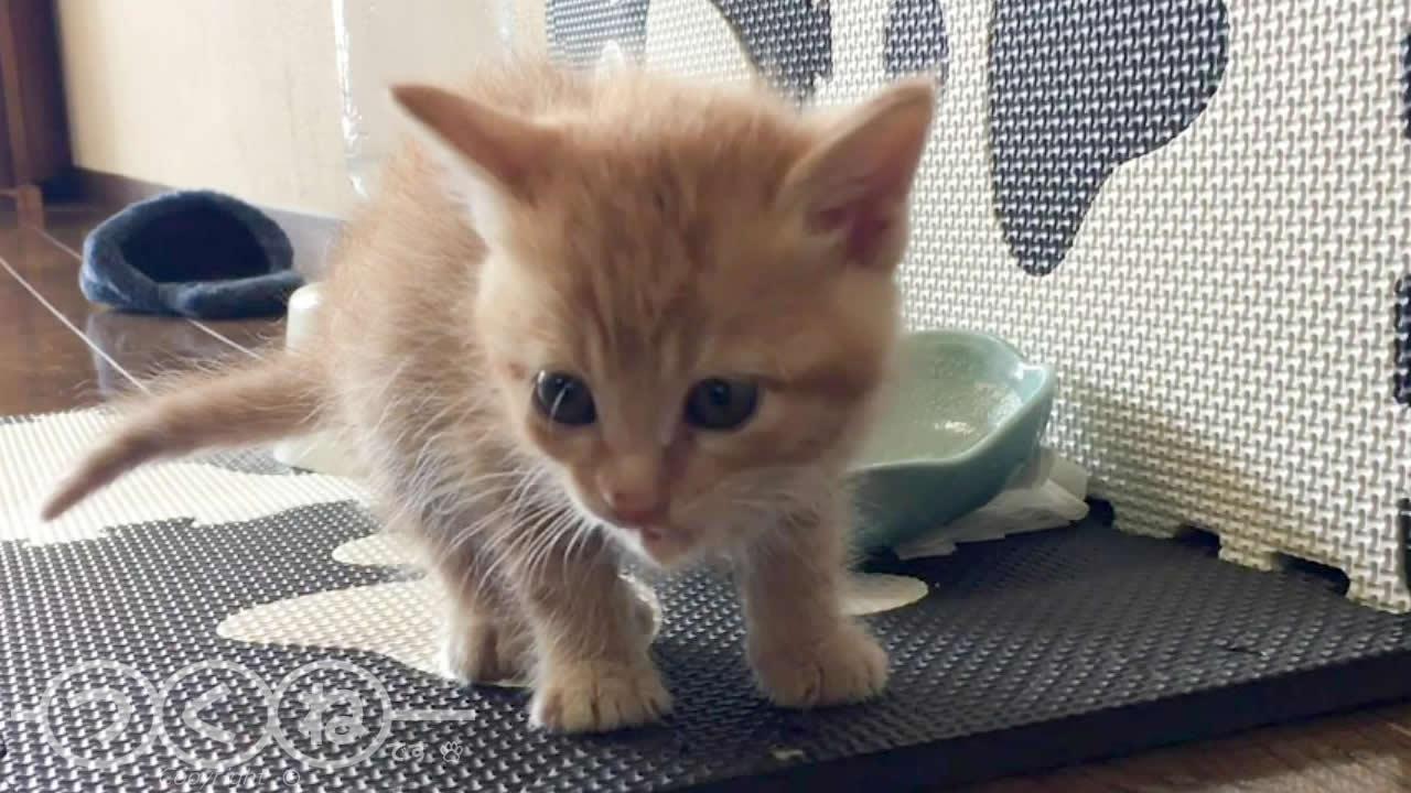 子猫 初めての離乳食