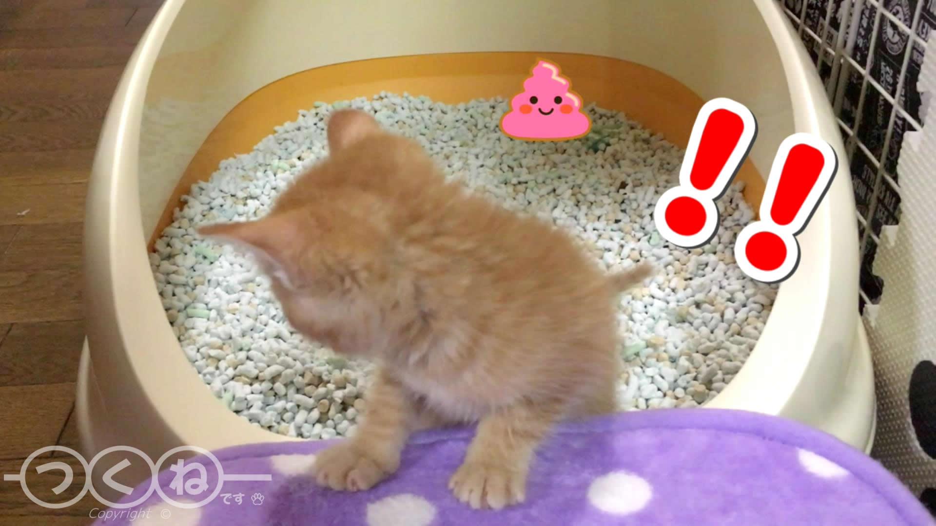 子猫 砂のかけ忘れ