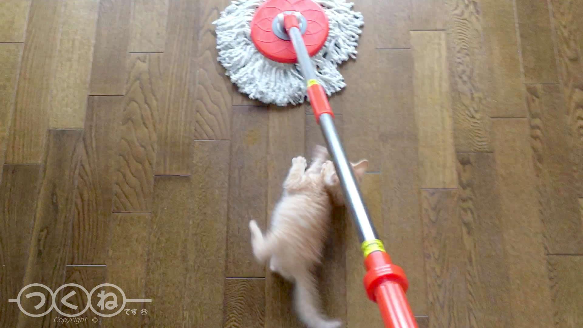 回転モップに立ち向かう子猫