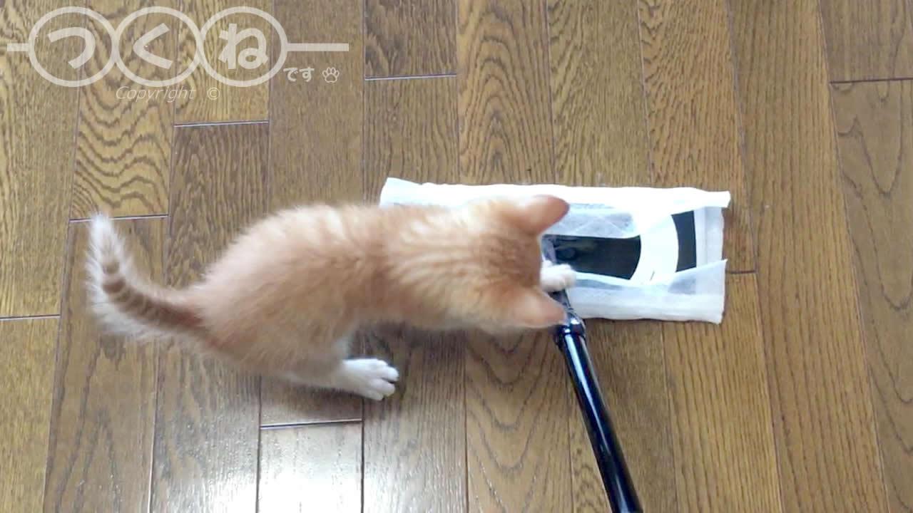 戦いに勝った子猫