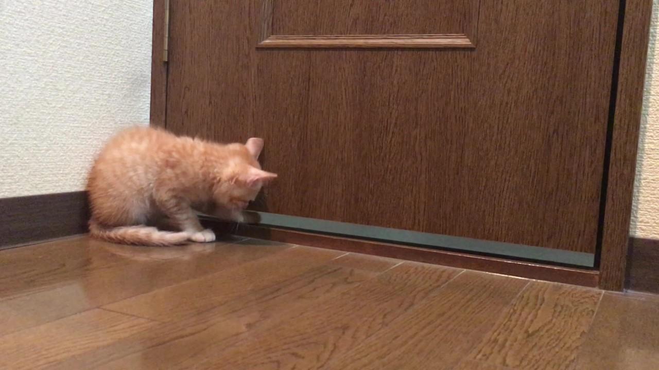 トイレを待つ茶トラ子猫