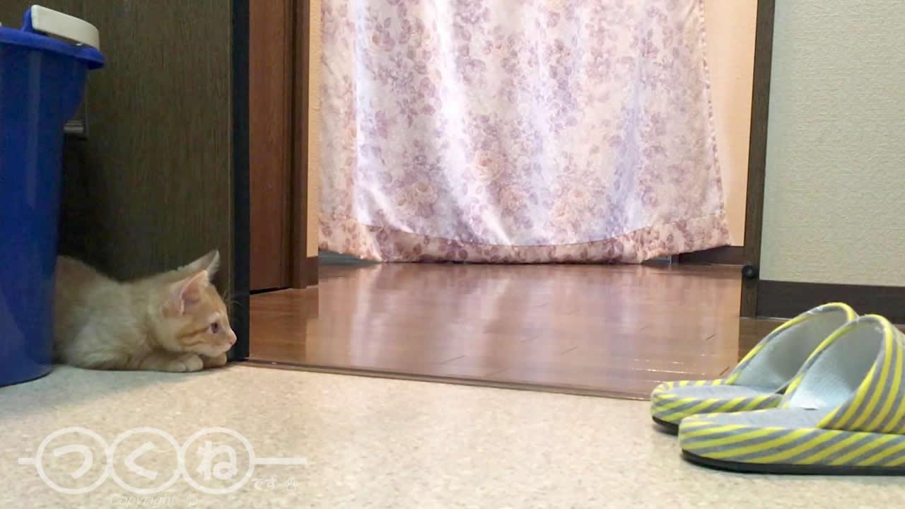 飼い主のトイレを待つ子猫