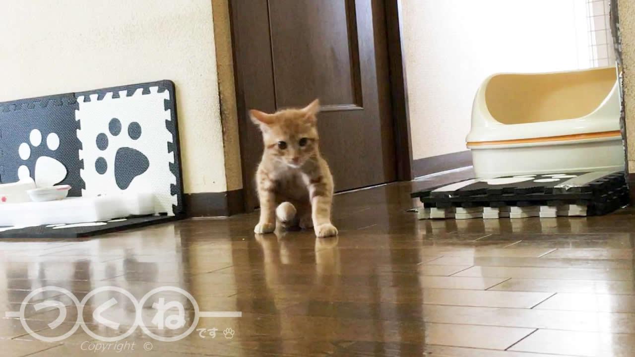 猫のお尻歩き