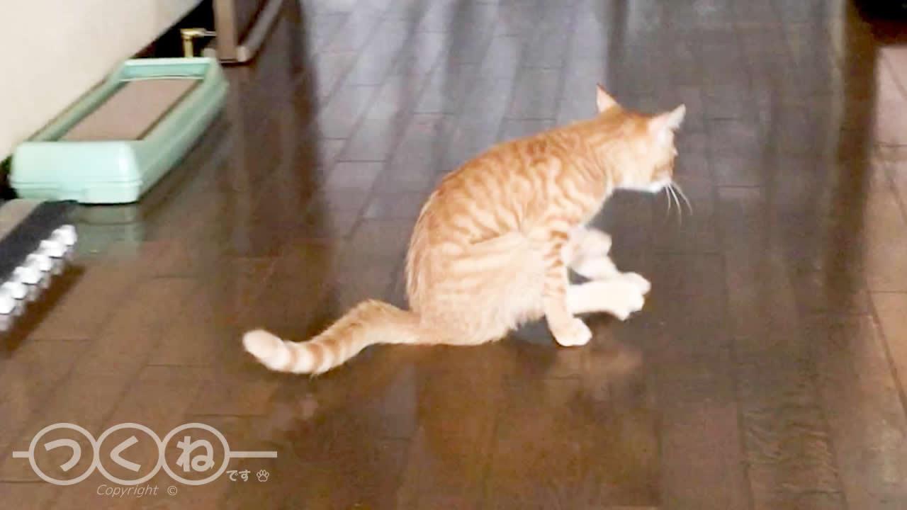 おしり歩きする猫