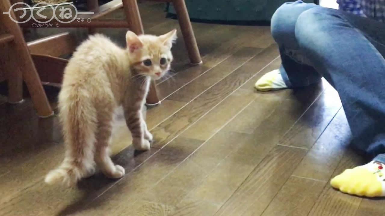 保護してくれた恩人と再会する子猫