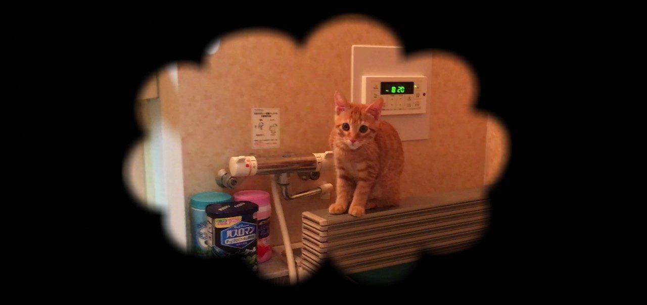 お風呂で待つ子猫