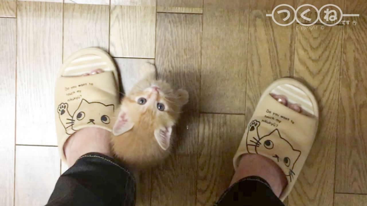 足元で遊んで待つ子猫