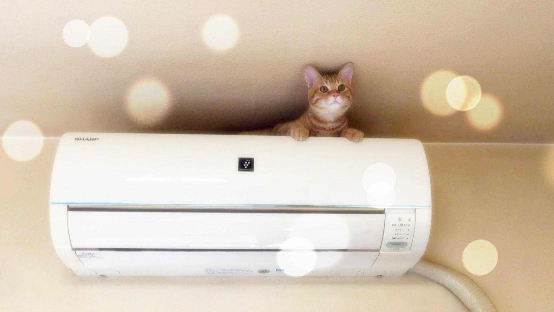 猫がエアコンに乗る