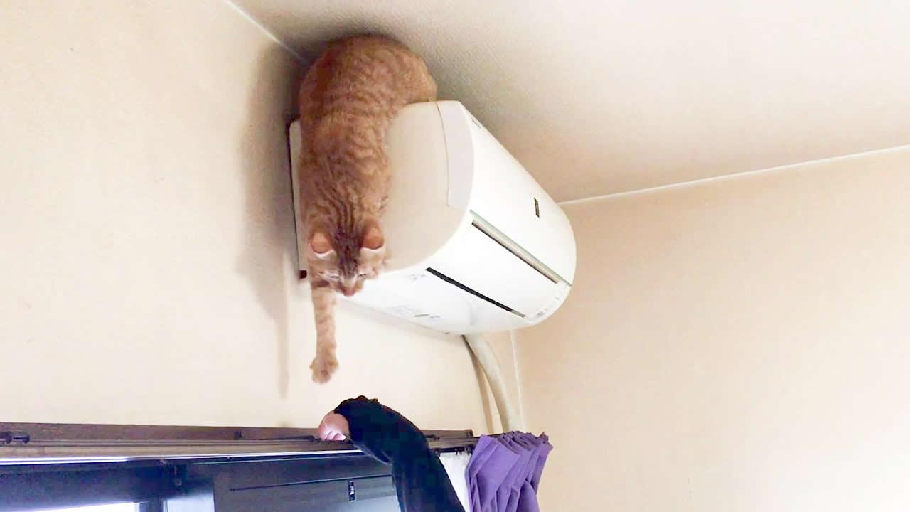 エアコンから、なかなか降りられない猫