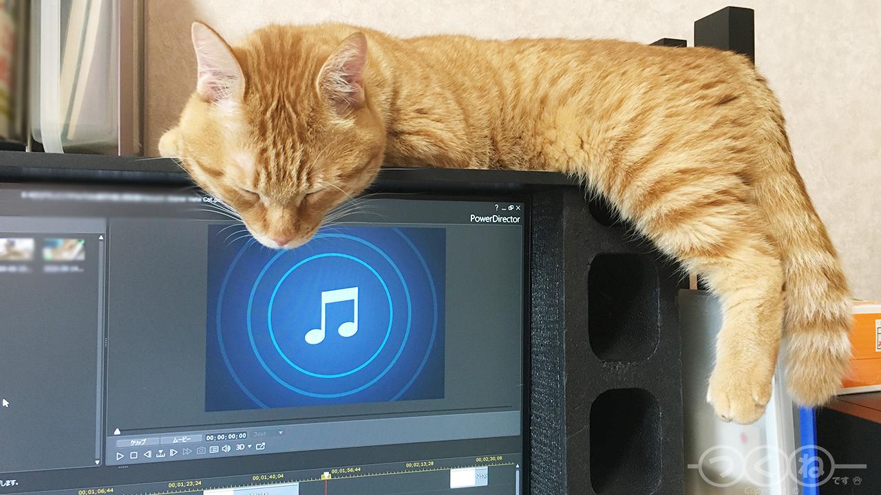 猫のパソコン妨害作戦