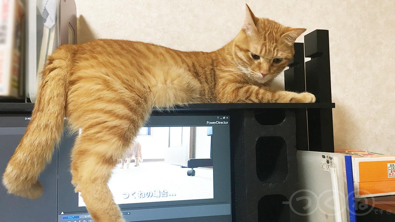 パソコンやめろ!な猫