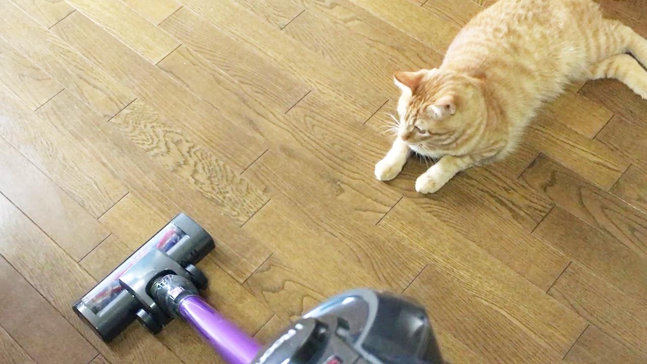 掃除機が大嫌いなネコ