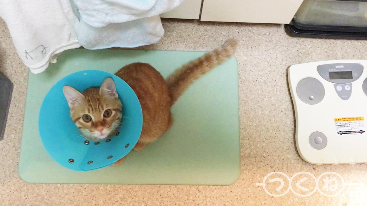 去勢手術3日目の猫