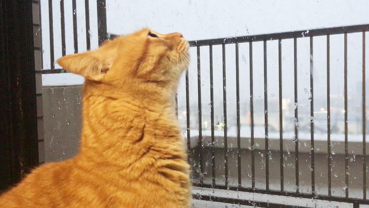 初めて雪を見た猫