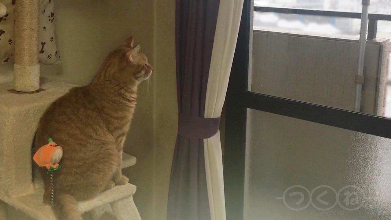 窓から雪を眺める猫