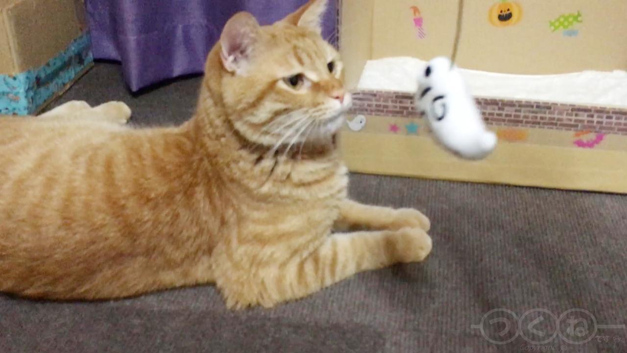 オバケじゃらしと猫