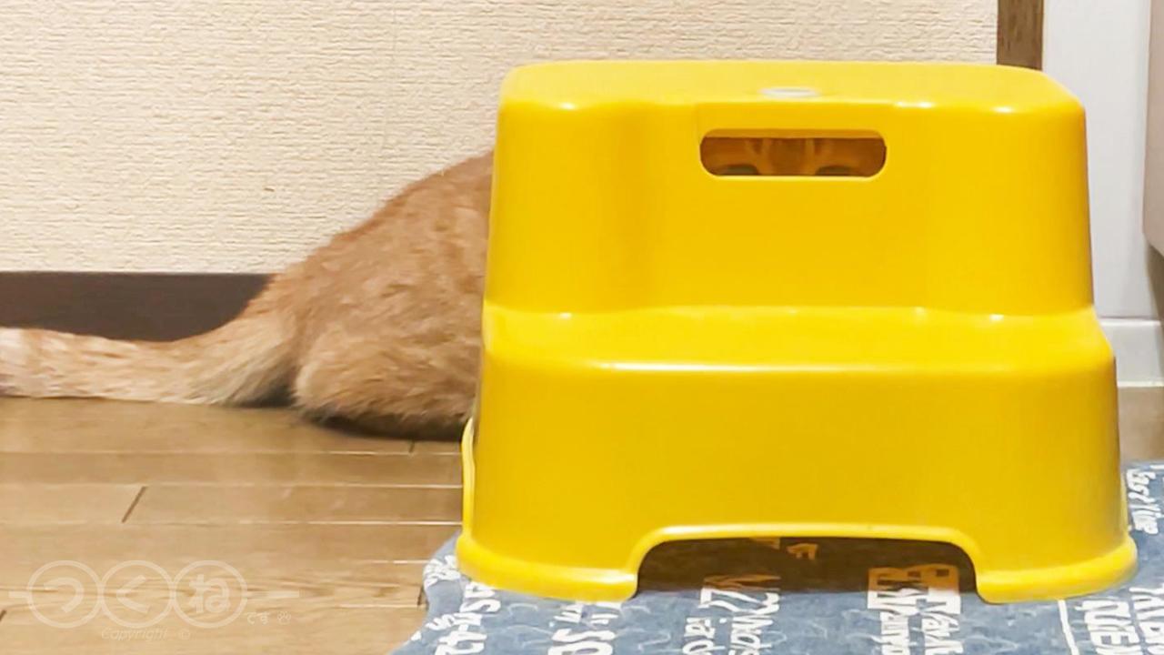 何処かから見てる猫