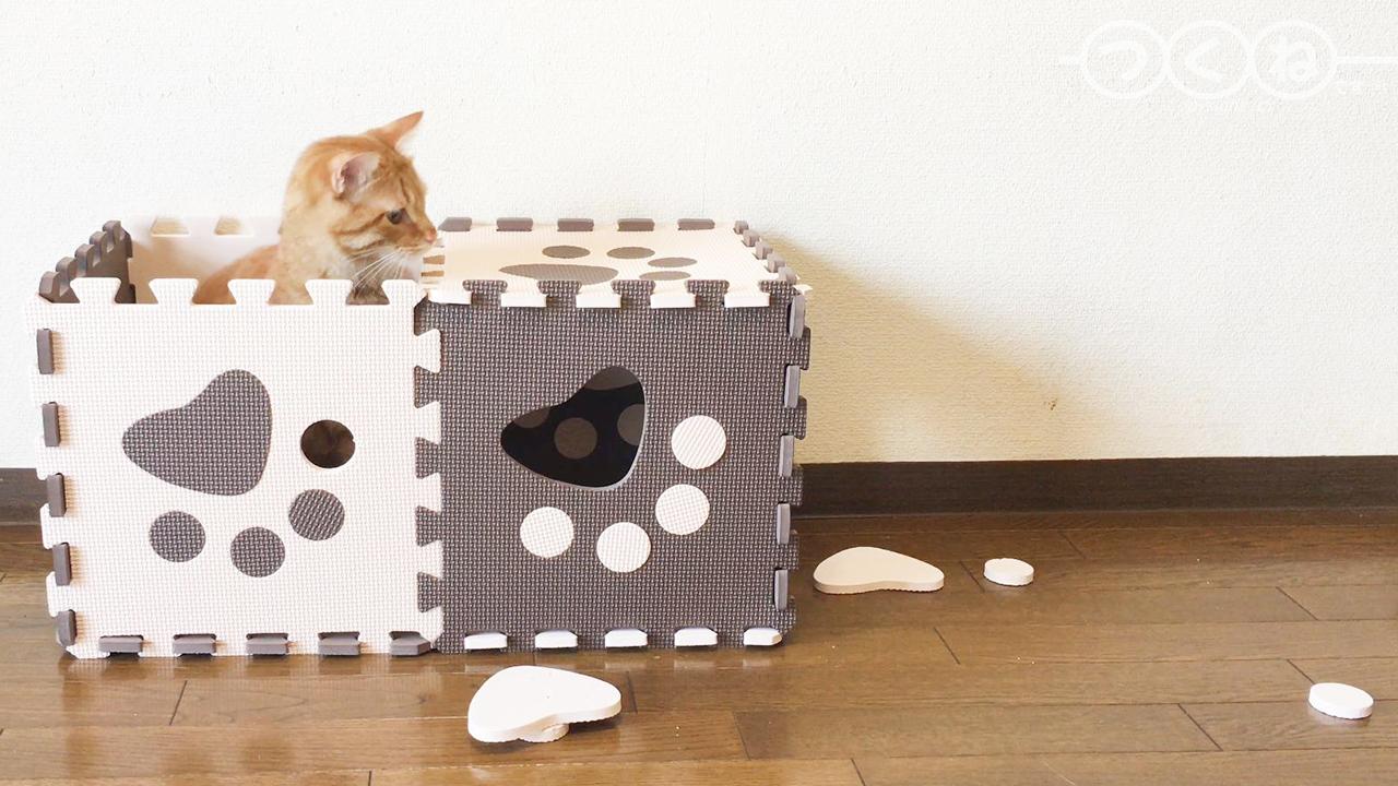 ジョイントマットで遊ぶ猫