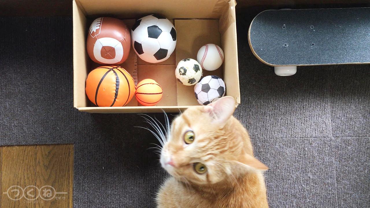 ボールのオモチャを選ぶ猫