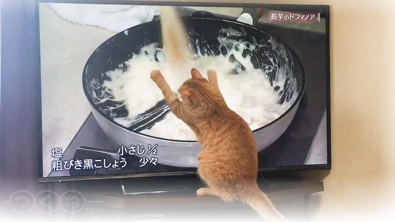 料理番組に参加しちゃう猫