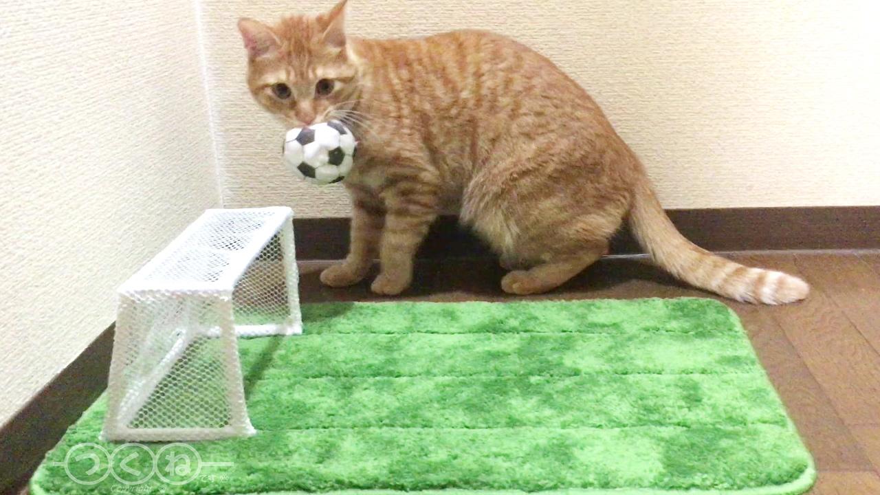 サッカーが上手な猫つくね