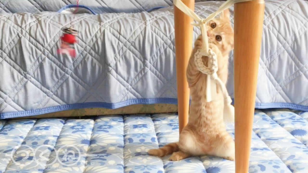 猫の『取ってこい』寄り道中