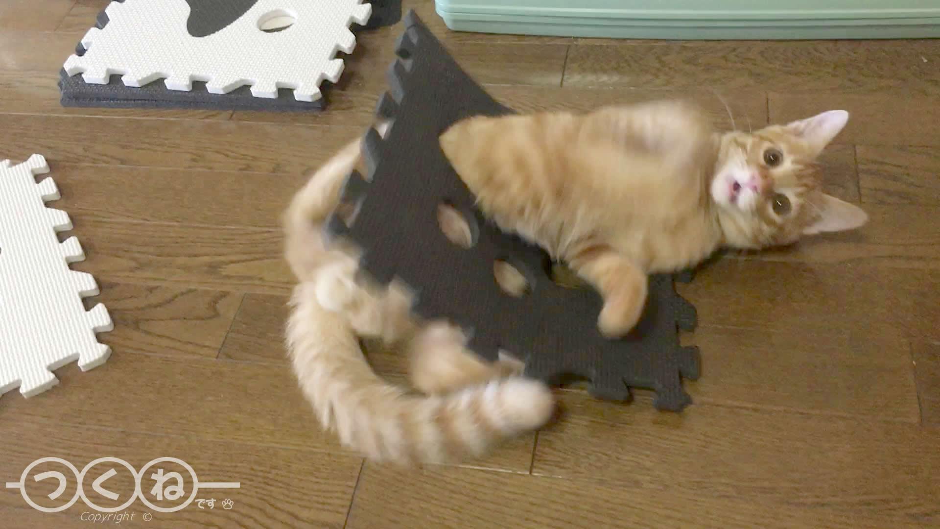 フロアーマットで遊ぶ猫