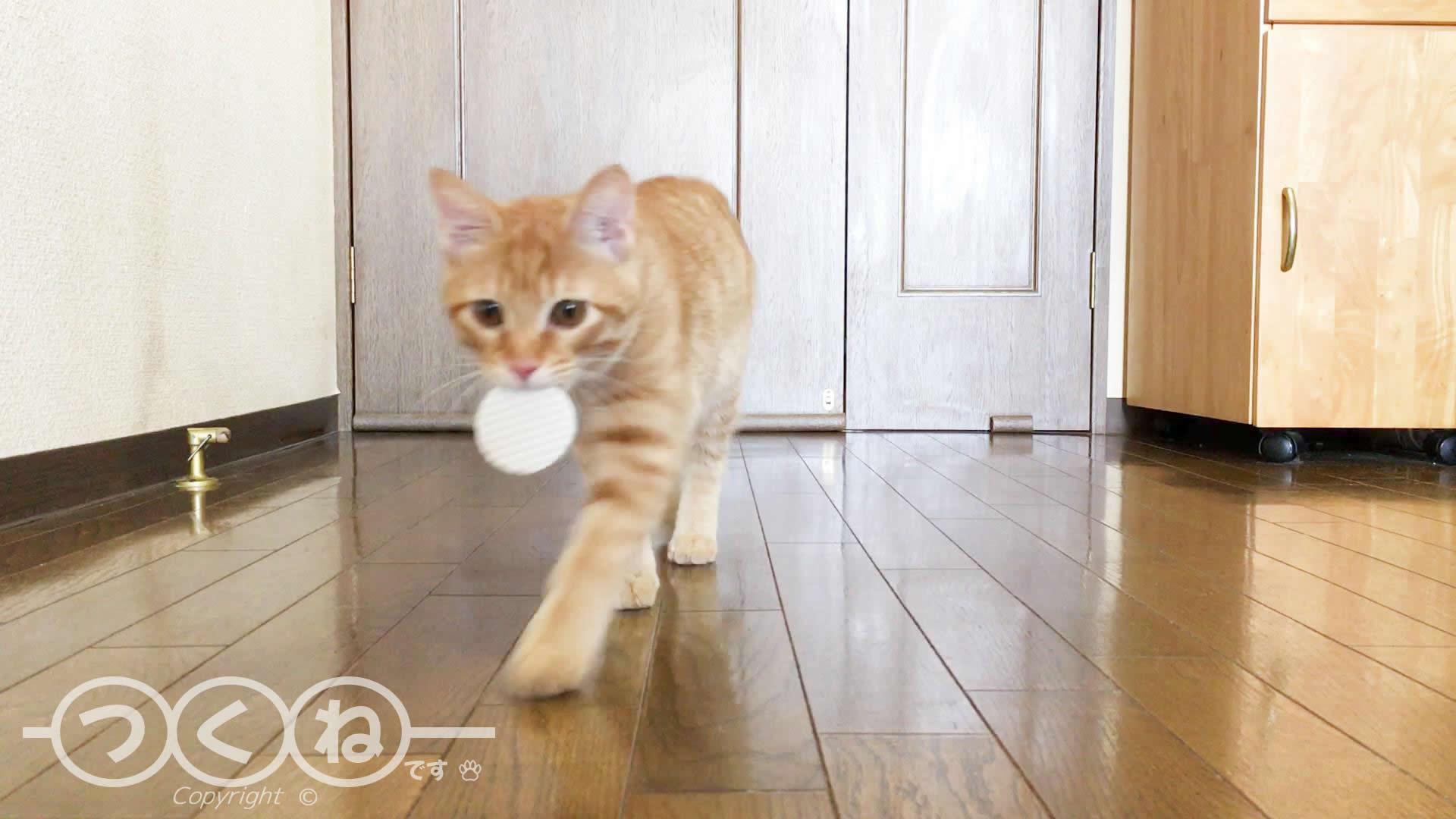 マットで取って来いする猫