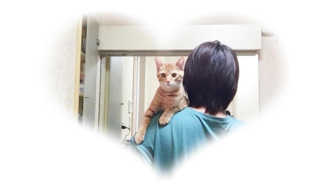 歯みがき中に肩に登る猫