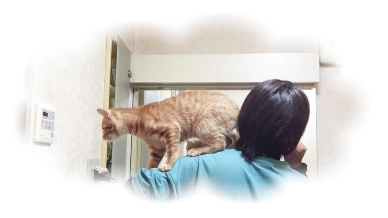 肩の上で遊んでいる猫