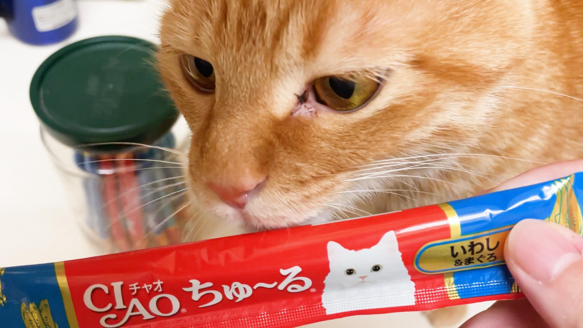 猫の黒い目ヤニ