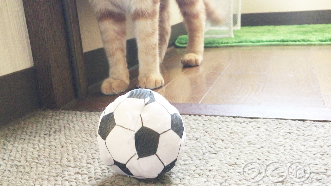 猫サッカー「とってこい」