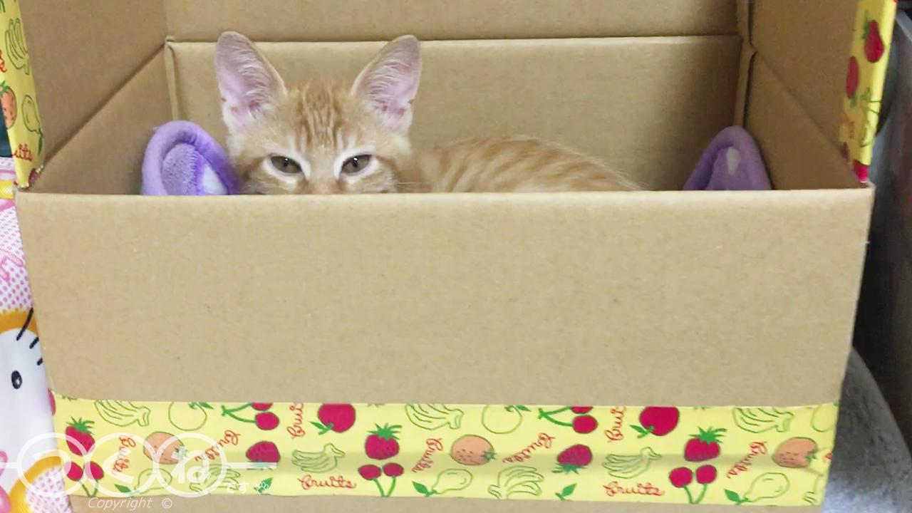 箱で待つ子猫