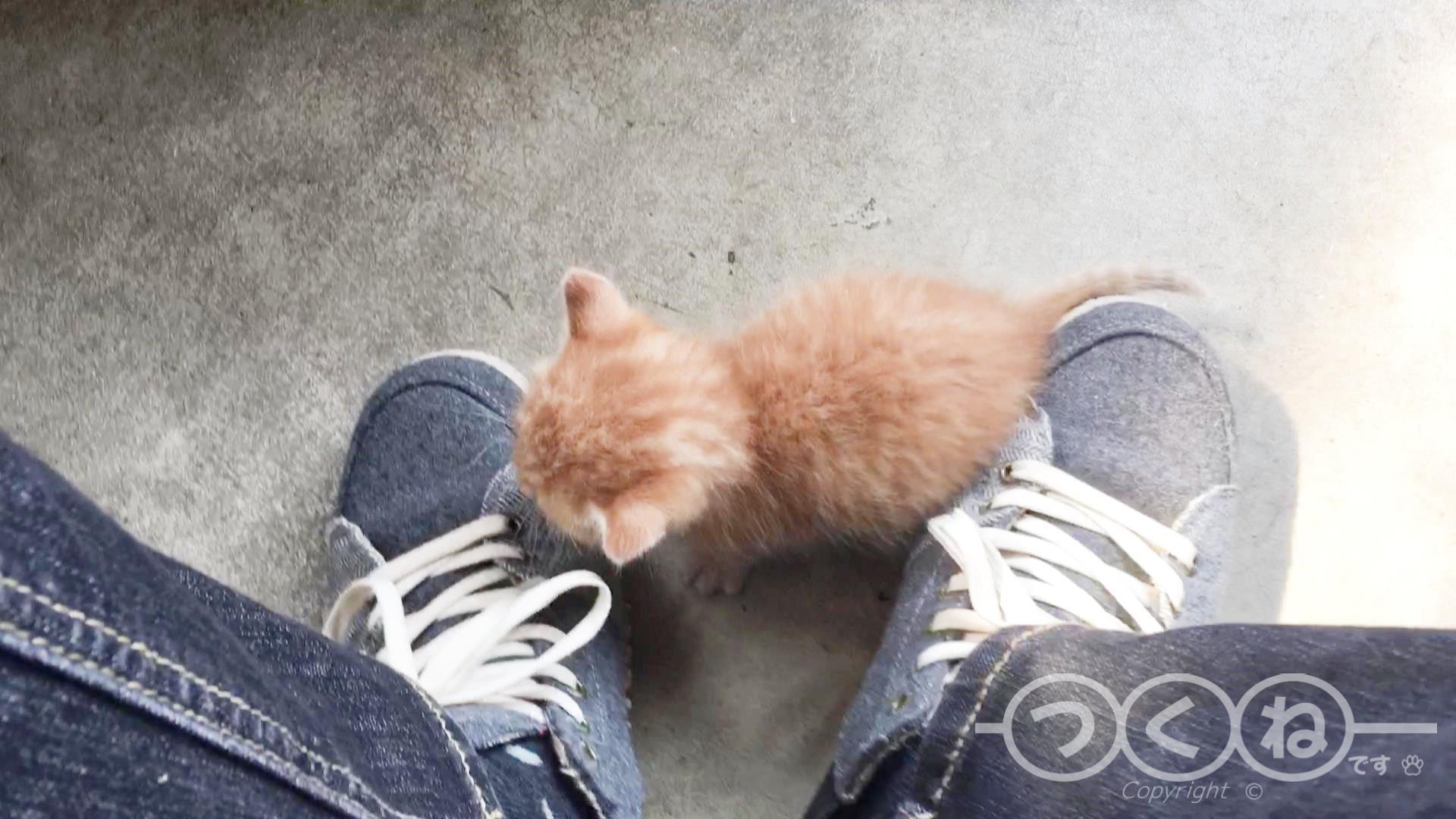 足元に子猫