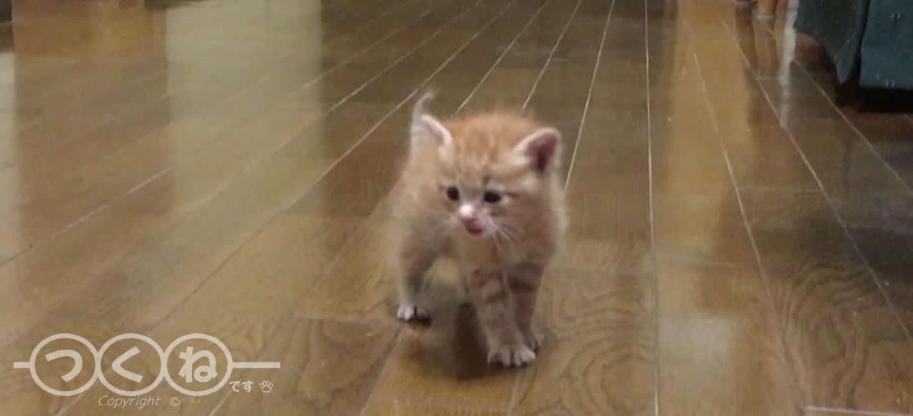 家の中をウロウロする子猫